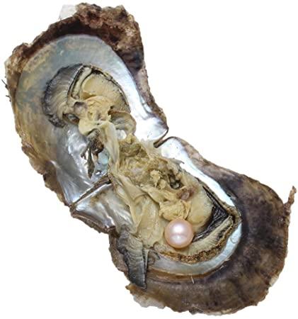Een akoya oester met parel