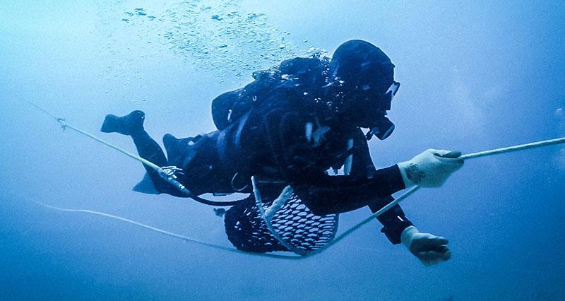 duiker op zoek naar parel oesters